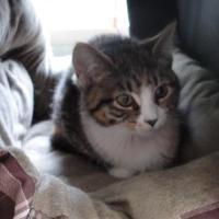 Adopt A Pet :: Kennedy - Eagle River, WI