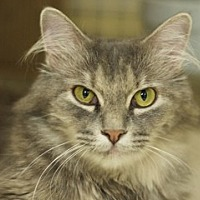 Adopt A Pet :: Elise - Great Falls, MT
