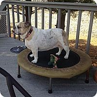 Adopt A Pet :: Mugsy - Decatur, IL