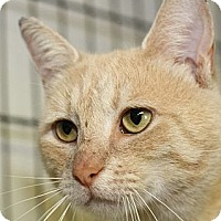 Adopt A Pet :: Bellview - Winston-Salem, NC