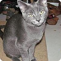 Adopt A Pet :: Blue - Oxford, CT