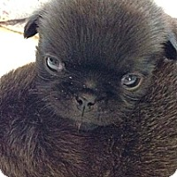 Adopt A Pet :: Pancake - Silver Lake, WI