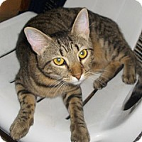 Adopt A Pet :: Tinks - Richmond, VA
