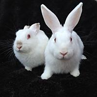 Adopt A Pet :: Isidore & Aragon - Watauga, TX
