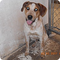 Adopt A Pet :: George - Reno, NV
