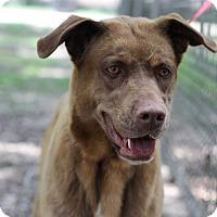 Adopt A Pet :: Bueller (Rosie) - Covington, LA