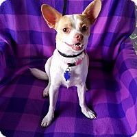 Adopt A Pet :: Pineapple - San Antonio, TX