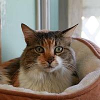 Adopt A Pet :: Catie Purry - Norman, OK