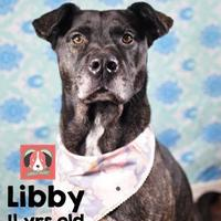 Adopt A Pet :: Libby - Lonely Heart - Gulfport, MS