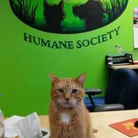 Adopt A Pet :: Julian - Northfield, MN