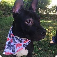 Adopt A Pet :: Jonesy - Sacramento, CA