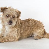 Adopt A Pet :: Canelito - Monterey, CA