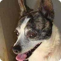 Adopt A Pet :: Tiny - Leesport, PA