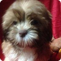 Adopt A Pet :: Bridget - Hazard, KY
