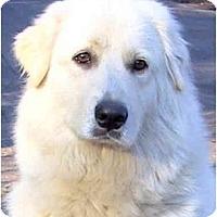 Adopt A Pet :: ANGEL - Wakefield, RI