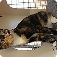 Adopt A Pet :: Chloe - Vero Beach, FL