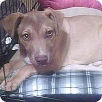 Adopt A Pet :: Jax - Mesa, AZ