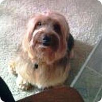 Adopt A Pet :: Snoops - Duluth, GA