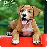 Adopt A Pet :: Raine - Albany, NY