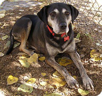 Rottweiler/Shepherd (Unknown Type) Mix Dog for adoption in El Cajon, California - Mabel