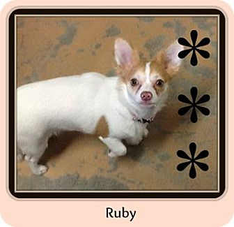 Chihuahua Puppy for adoption in New Richmond,, Wisconsin - Ruby
