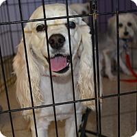 Adopt A Pet :: Jelly - Scottsdale, AZ