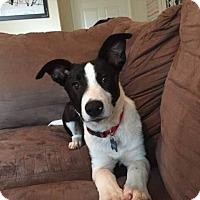 Adopt A Pet :: Roland - Austin, TX