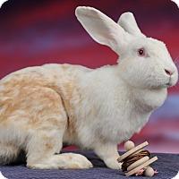 Adopt A Pet :: Julie B - Marietta, GA
