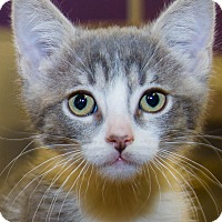 Adopt A Pet :: Tinker - Irvine, CA