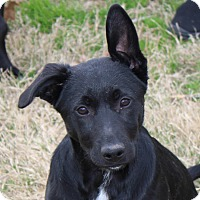 Adopt A Pet :: Riggs - in Maine - kennebunkport, ME