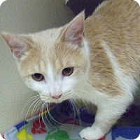 Adopt A Pet :: General McStuffins - Hamburg, NY