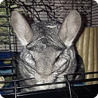 Adopt A Pet :: Bingo - Patchogue, NY