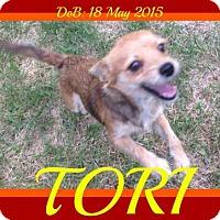 Adopt A Pet :: TORI - Sebec, ME
