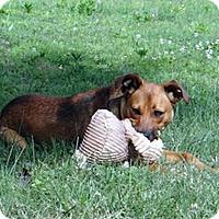 Adopt A Pet :: Carter - Knoxville, TN