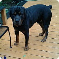 Adopt A Pet :: Spike - Rexford, NY