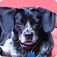 Adopt A Pet :: Nyx - North Wilkesboro, NC