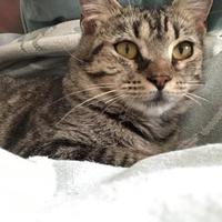 Adopt A Pet :: Talulah - Oxford, MS