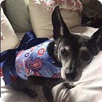 Adopt A Pet :: Spookie - Creston, CA