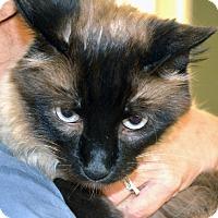 Adopt A Pet :: Chuchi - Casa Grande, AZ