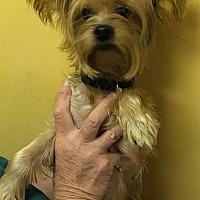 Adopt A Pet :: 17-09-2955 Gayle - Dallas, GA