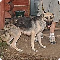 Adopt A Pet :: Reese - Hamilton, MT