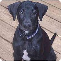 Adopt A Pet :: Mickey - Cumming, GA