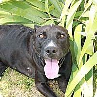 Adopt A Pet :: Rocky - Alliance, NE