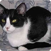 Adopt A Pet :: Henry - AUSTIN, TX