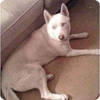 Adopt A Pet :: MIKA - Malibu, CA