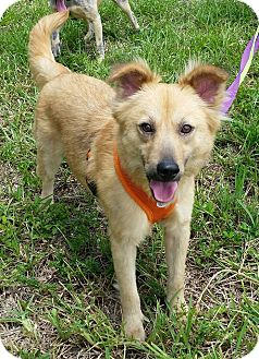 Terrier (Unknown Type, Medium) Mix Dog for adoption in Ft. Lauderdale, Florida - Mocha