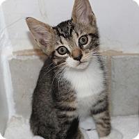 Adopt A Pet :: Twix - Miami, FL