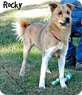 Chow Chow Mix Dog for adoption in Lawrenceburg, Tennessee - Rocky