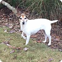 Adopt A Pet :: Madison - Homewood, AL