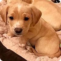 Adopt A Pet :: Benny - Marlton, NJ